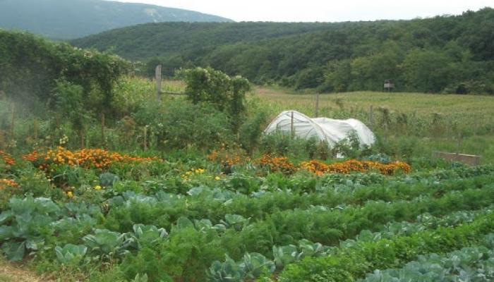 2008.08.15. Piliscsév háló építk, kert, naplemente 009_resize.jpg