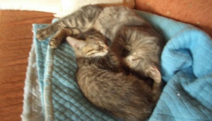 2008.09. hó cicák, nyuszik 009_resize.jpg