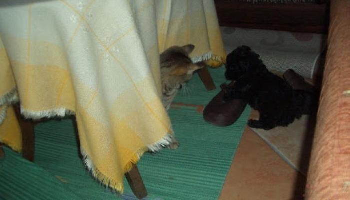 2008.12.20. Prücsök és a cicák 003_resize.jpg