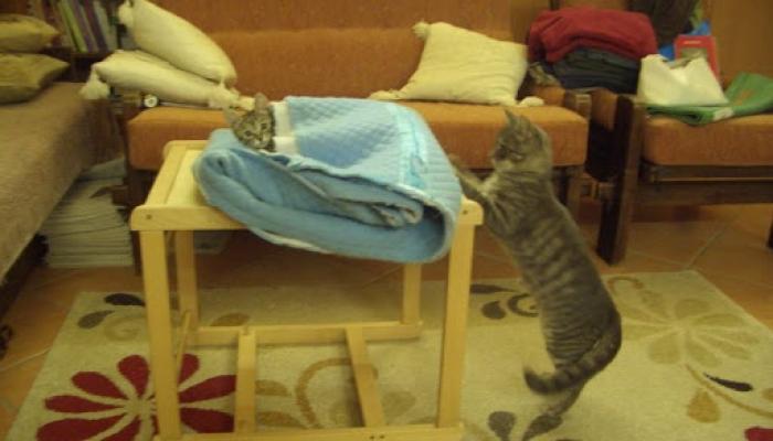 2008.09. hó cicák, nyuszik 007_resize.jpg