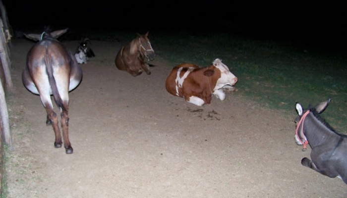 2009.07.24 Cicák, Bogi2kiskutya, lovak, fecskék 009_resize.jpg