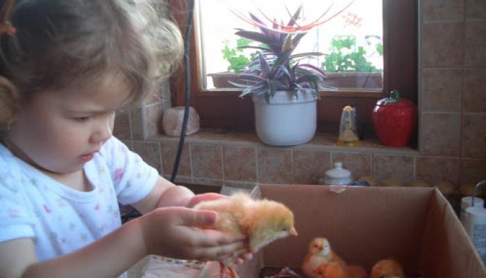 2008. május - Viki és a kispipik 008_resize.jpg