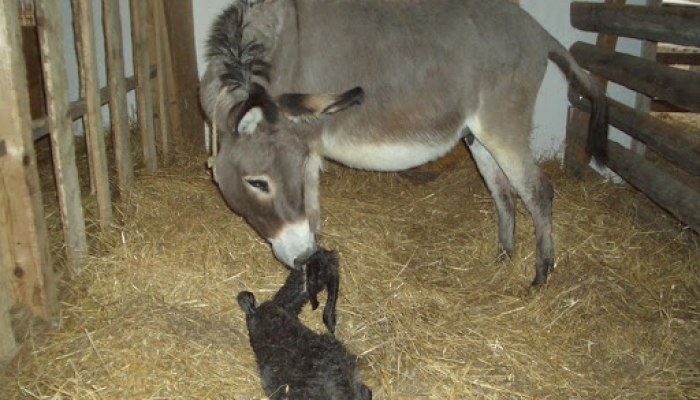 2008 április 05. Csini baba megszünetett 007_resize.jpg