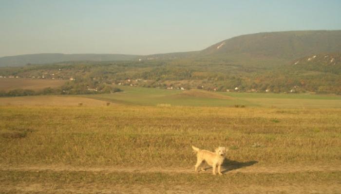 2008.10.11 Állatok és tanya 010_resize.jpg