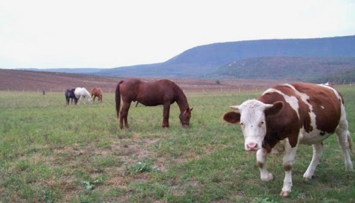 2009.10.19. Állatok a legelőn és kert 007_resize.jpg