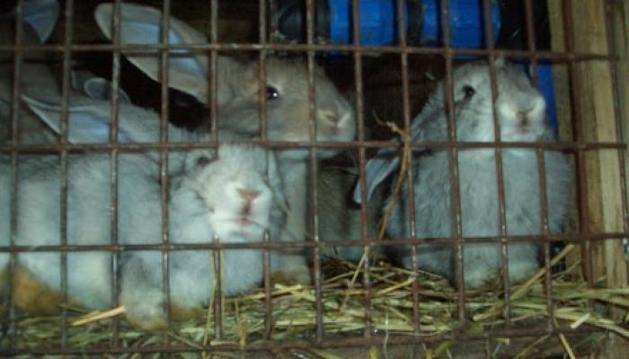 2008.09. hó cicák, nyuszik 003_resize.jpg