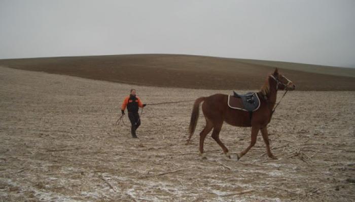 2009.02.01 Lovaglás és még néhány jó kép 009_resize.jpg