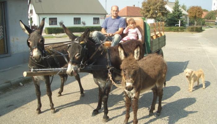 2008.09.30 Viki Cséven a csacsiskordén 012_resize.jpg