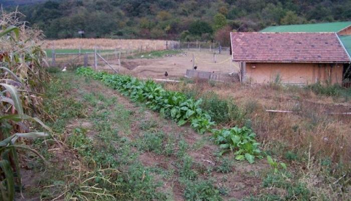2009.10.19. Állatok a legelőn és kert 012_resize.jpg