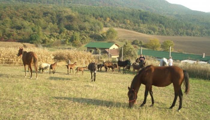2008.10.11 Állatok és tanya 009_resize.jpg