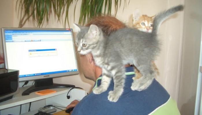 2008. június állatok 002_resize.jpg