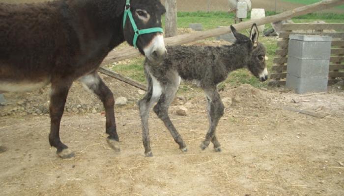 2009.04.23. Kis Szuszi megszületett 006_resize.jpg