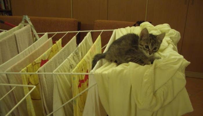 2008.09. hó cicák, nyuszik 005_resize.jpg