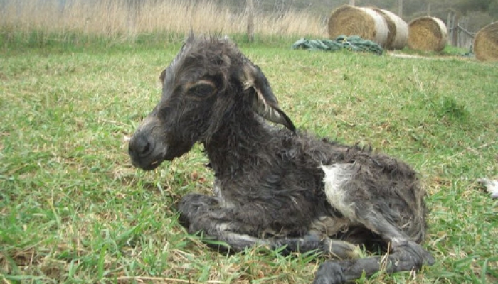 2008 április 05. Csini baba megszünetett 003_resize.jpg