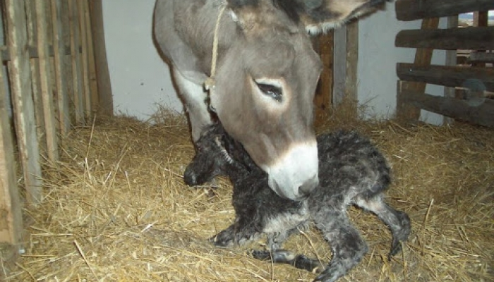 2008 április 05. Csini baba megszünetett 008_resize.jpg