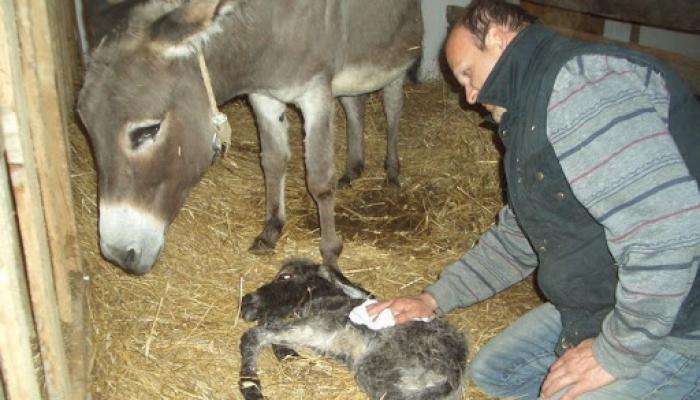2008 április 05. Csini baba megszünetett 018_resize.jpg