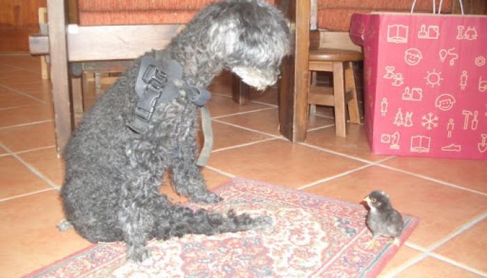 2008.07.hó csévi állatok 010_resize.jpg